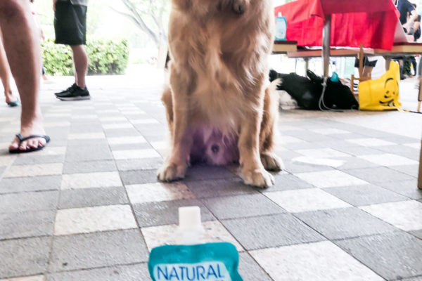 SMU PAW Animal Day 2019-4