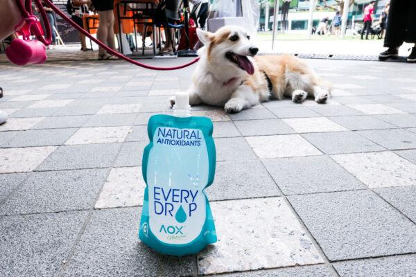 SMU PAW Animal Day 2019-6